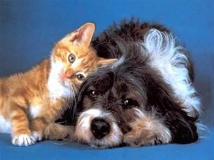 Գագիկ Բեգլարյանի «շունն ու կատուն»