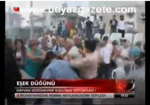 Ослиная свадьба в Турции закончилась дракой
