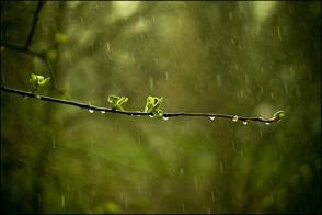 Երեկոյան ժամերին սպասվում են կարճատև անձրև և ամպրոպ