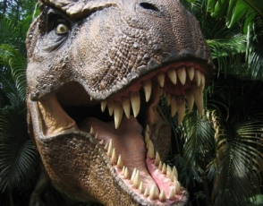 Ճապոնիայում տիրանոզավրի 81 մլն տարվա ժանիքներ են գտել (լուսանկար)