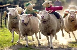 Властная наживка и невинные «овечки»
