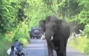 Հնդկաստանում փիղը հարձակվել է մոտոցիկլիստի վրա