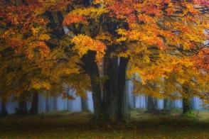 Նիդեռլանդների հեքիաթային անտառները՝ ֆոտոշարքով