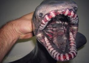 Ռուսաստանում ձկնորսն «այլմոլորակային» էակներ է հայտնաբերել (ֆոտոշարք)