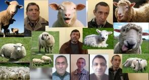 Կեղծ փողերով գառ ու ոչխար էին ձեռք բերել