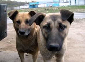 Այսօր անտուն կենդանիների պաշտպանության միջազգային օրն է