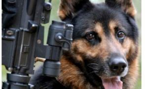 Ադրբեջանում որոշել են շներին վարժեցնել՝ տարբերակելու հայերեն խոսքը