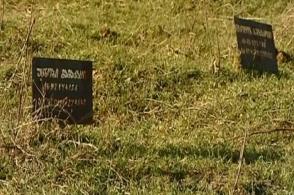 Շներն ու դիերը. Թբիլիսիի քաղաքապետարանը ստուգումներ կանցկացնի գերեզմանատանը