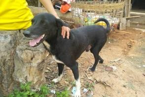 Թայլանդում շան օգնությամբ փրկվել է թաղված նորածինը