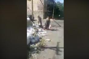 Շենգավիթ վարչական շրջանի հակահիգիենիկ վիճակը (տեսանյութ)