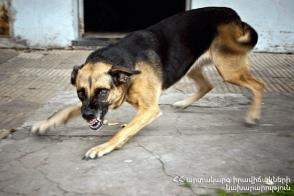 Վահագնի թաղամասում շները հարձակվել են բնակիչների վրա