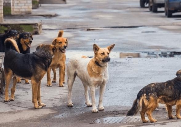 Էջմիածնում 57-ամյա տղամարդը սեփական հրացանով թափառող շների սպանդ է իրականացրել