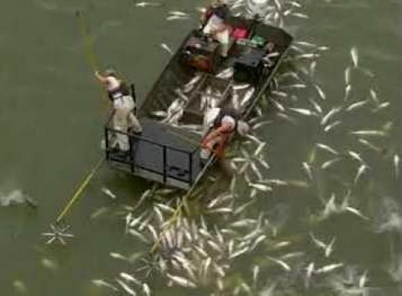 Բոլոր ձկնորսների երազանքը