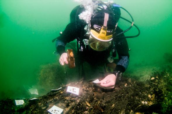На дне моря найдены продвинутые технологии из каменного века