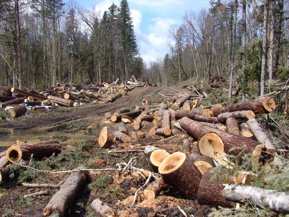 2018-ի հաշվետվության անտառը