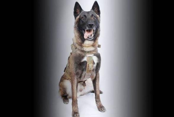 The New York Times-ն ԻՊ-ի պարագլխի ոչնչացման ամբողջ վաստակը վերագրել Է շանը. Թրամփ