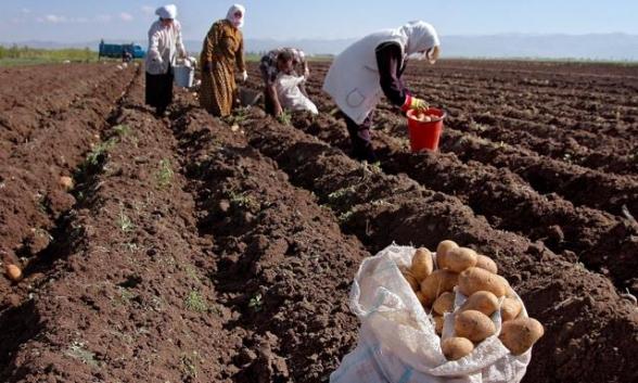 Ինչու է գյուղատնտեսությունն այսքան անտեսված. փաստեր, որոնք արդեն իսկ մտահոգիչ են․ «Փաստ»