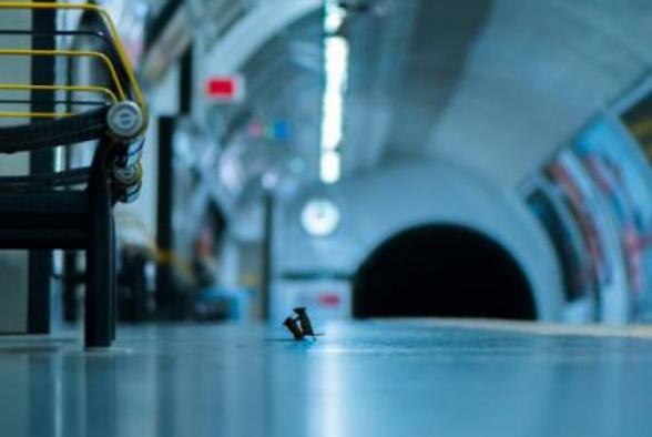 Մկների մարտը Լոնդոնի մետրոյում ստացել է հանրության գլխավոր մրցանակը