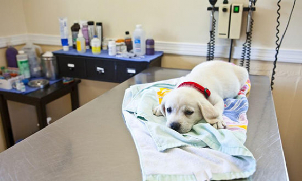 В Гонконге у собаки заболевшего хозяина выявлен коронавирус