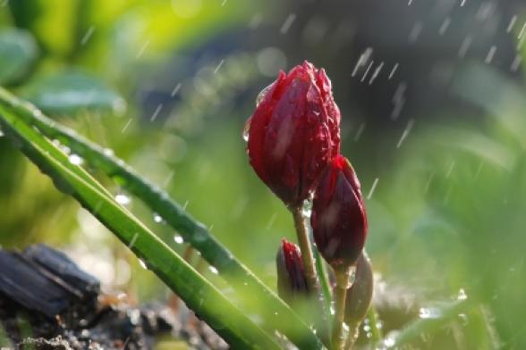 Օդի ջերմաստիճանն ապրիլի 5-ի ցերեկը և 6-ի գիշերը կբարձրանա 5-7 աստիճանով, 7-8-ին աստիճանաբար կնվազի 6-8 աստիճանով
