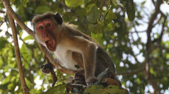 В Индии обезьяны выкрали пробы крови для тестов на коронавирус (видео)