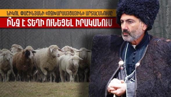 Նիկոլ Փաշինյանի «ոչխարաայծային» արտահանումը․ ի՞նչ է տեղի ունեցել իրականում