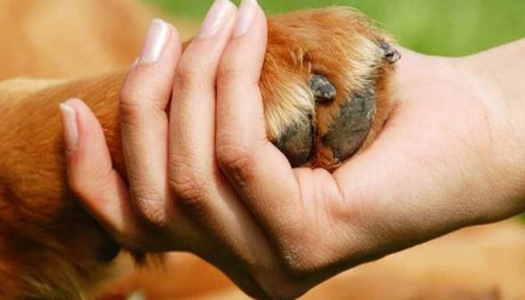Այսօր Կենդանիների պաշտպանության համաշխարհային օրն է