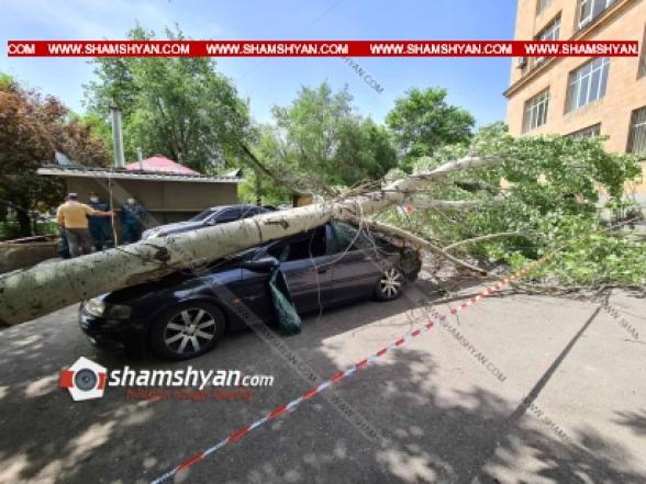 ԵՊՀ-ի բակում հսկայական բարդին արմատից պոկվել ու տապալվել է, վնասվել են BMW X3, Nissan XTrail և Opel մակնիշի ավտոմեքենաներ