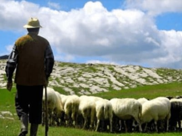 «Ասում էին՝ արի այստեղ». ադրբեջանցիներին այդքան մոտ հանդիպելն անակնկալ էր Վերիշենի հովվի համար