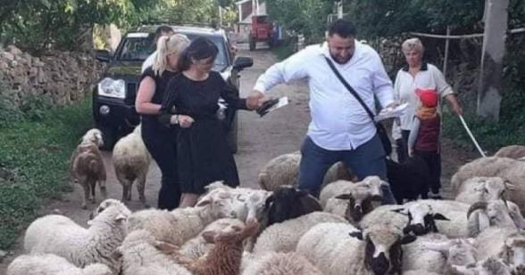 Արփի Դավոյանը՝ ոչխարների մեջ բուկլետ բաժանելիս (լուսանկար)