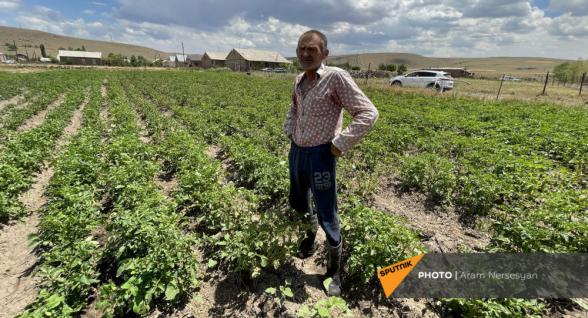 В Шираке высыхают поля с картофелем – откуда взять воду? (фото)