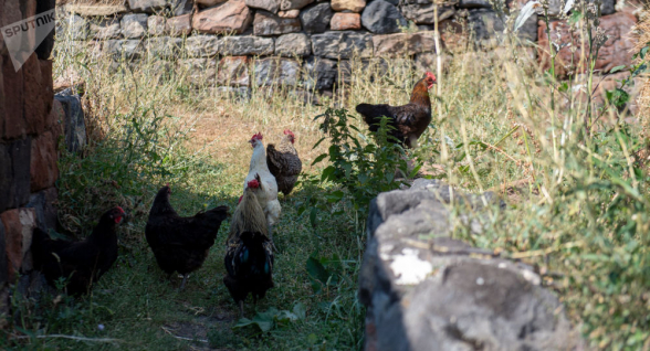 Հիմա էլ H5N6. Չինաստանում թռչնագրիպի բռնկում է գրանցվել