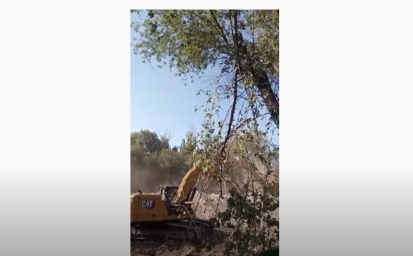 «Ֆիզգորոդոկ»-ում 50 տարվա ծառեր են հատվել. բնակիչներից մեկը ջրադուլ և հացադուլ է հայտարարել
