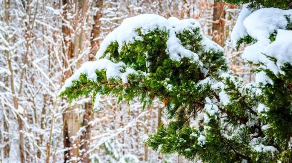 Հայաստանում տեղացել է առաջին ձյունը (տեսանյութ)