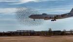 Թուրքական ինքնաթիռը մխրճվել է երամի մեջ