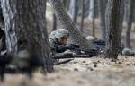 Семь стран НАТО подписали договор о намерении создать экспедиционный корпус