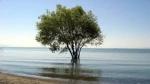 Շարունակվում են Սևանա լճի ջրածածկ հատվածների մաքրման աշխատանքները