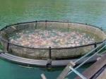 Հայաստանում կրճատվել են ձկան արտադրության և արտահանման ծավալները