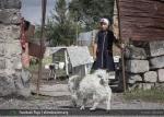 «Շիրակ կենտրոնի» հրապարակային հարցումը ՀՀ բարձրագույն իշխանություններին անօթևան ընտանիքներին բնակարաններով ապահովելու ընթացքի մասին