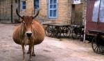 Կենդանիներ, որոնք մի թեթև հղի են (լուսանկարներ)