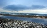 Ադրբեջանը շարունակում է աղտոտել Կասպից ծովը