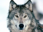Բնապահպան. «Այս որոշմամբ բացվեց որսորդների ճանապարհը»