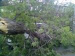 Ծառն ընկել է ավտոճանապարհին