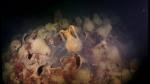 Սև ծովի հատակին անտիկ դարաշրջանի նավ է հայտնաբերվել (տեսանյութ)