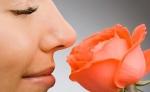 Մարդու ինքնությունը կարելի է որոշել նրա քթին ռեցեպտորների դասավորվածությամբ