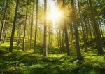 Գիտնականները հաշվել են ծառերի թիվը երկրագնդի վրա