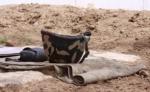Պաշտպանության բանակի պայմանագրային զինծառայողներ են զոհվել