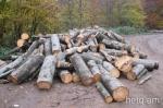 Կազմվել է  անտառխախտման 9 արձանագրություն