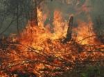 Այրվել են խաղողի այգի և խորդանոց