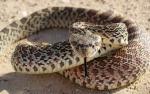 Երևանյան տներից մեկի բակում օձ է նկատվել